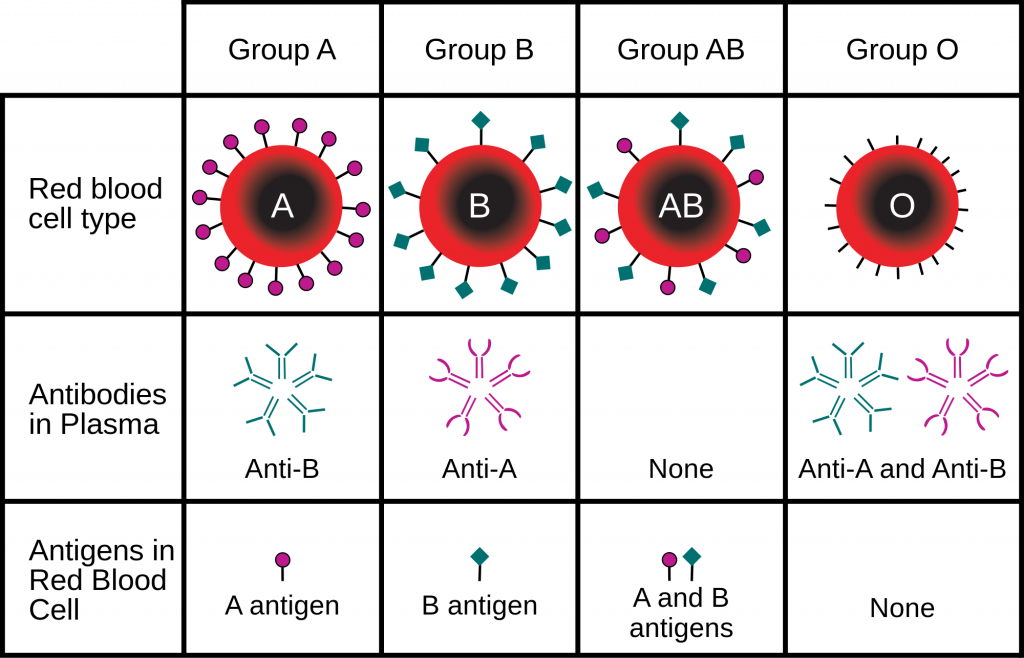 Blood Type ABO system charecteristics Antigens and Antibodies